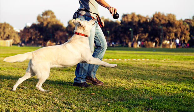 Dog Parks – Bad Or Good?