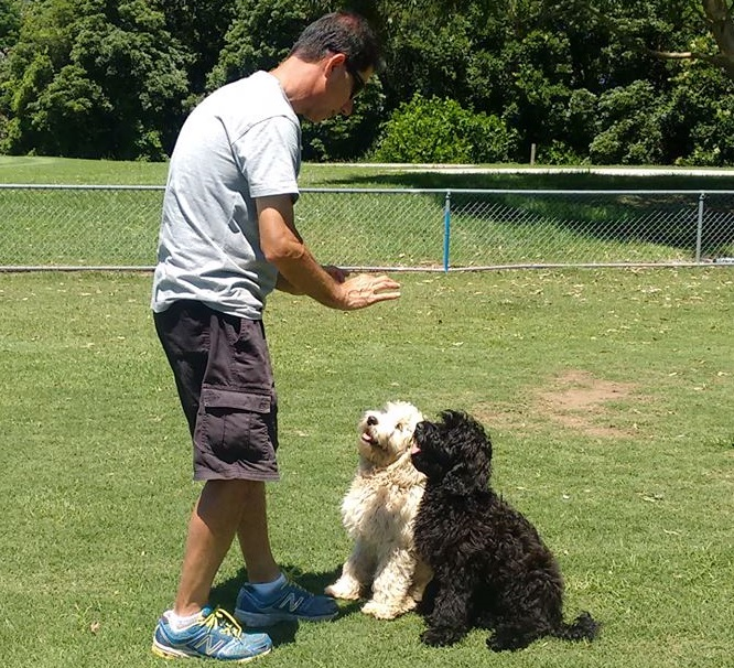 Why a dog Trainer is excellent Idea