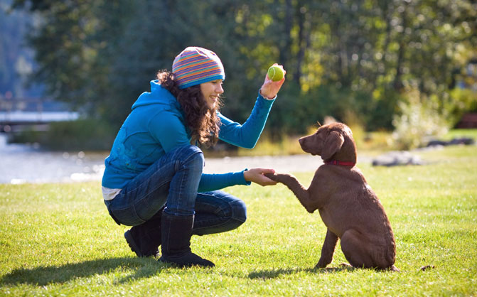 Beginning With Pet Training