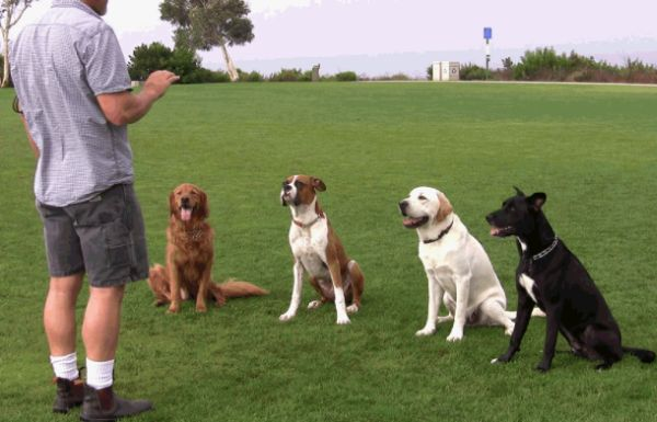 Characteristics of the Good Dog Trainer – Essential For any Dog
