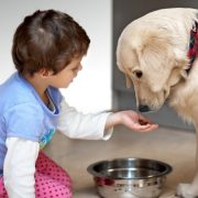 Teach Your Child about Proper Pet Care