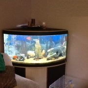 Tips on Buying a Fish Tank