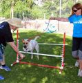 Insights For Mastering Dog Obedience