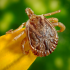 How Ticks Impact Your Pets Health
