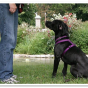 Tips On Using A Shock Barking Dog Collar