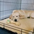 When you must to start dog crate training?