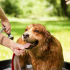 How to Protect Your Pets from Summer Pests