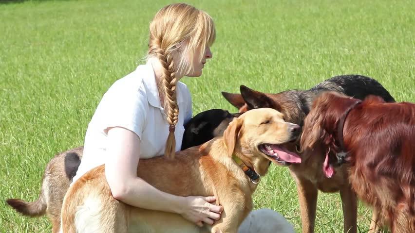 Five Reasons It Makes Sense to Hire a Professional Dog Walker