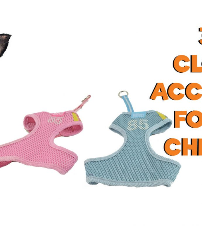 3 Top Clothing Accessories you should get your Chihuahua