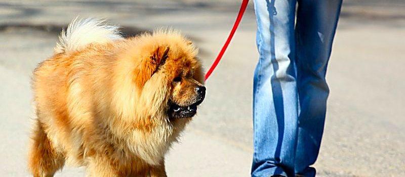 3 Tips For Exercising Senior Dogs