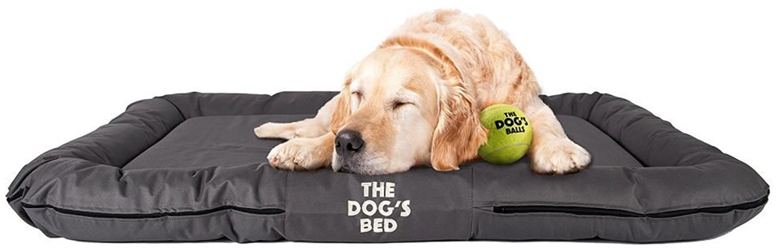 The Most Common Dog Bed Options