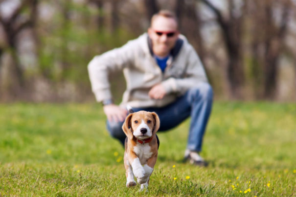 Puppy Training – Characteristics of the Good Trainer