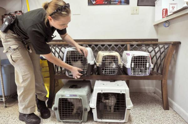Animal Control – When You Really Need Specialist Help