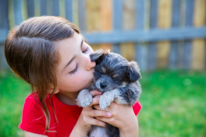 Picking a Puppy -Items to Consider Before Investing in a Dog