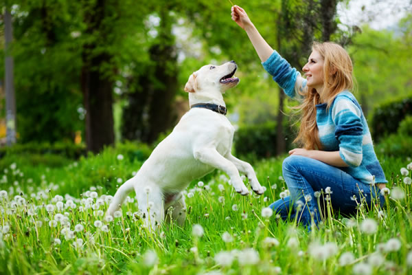 How you can Train Your Dog
