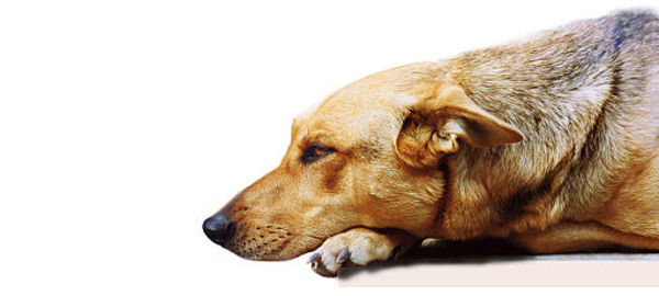 5 Fast Facts about Canna Pet Supplements in Detail!
