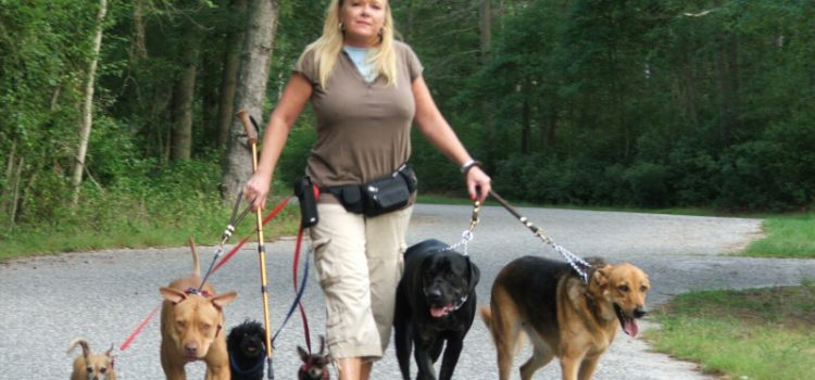 Five Reasons You Need to Hire a Dog Walker