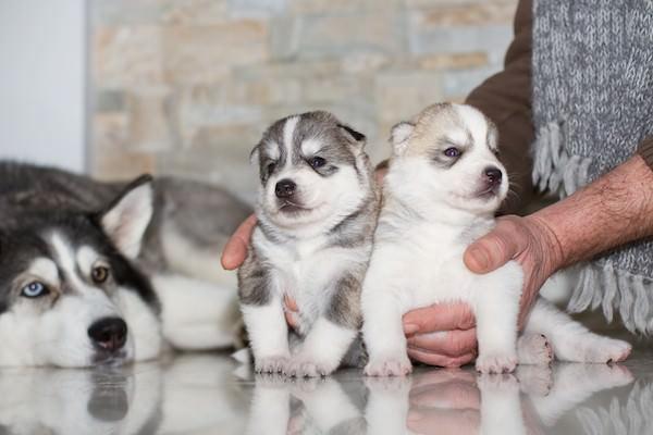The Alluring Factors of A Good Pet Shop