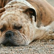 The Benefits of Dog Fever Treatment at Home