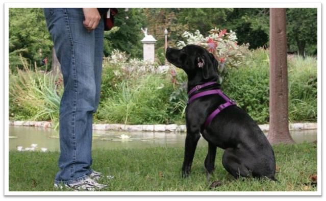Tips On Using A Shock Barking Dog Collar