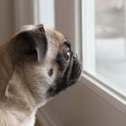 3 Reasons Why Your Dog Hates Being Left Alone at Home