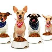 Does the Expensive Dog Food Is The Best Food