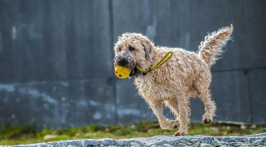 A happy open Kennel: Dog run