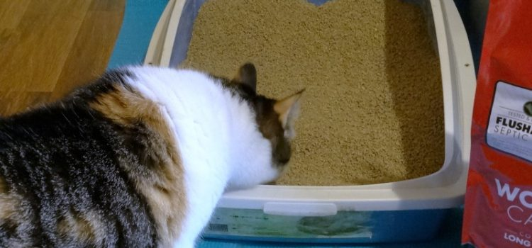 Find the Best Deals for the Cat Litters Now