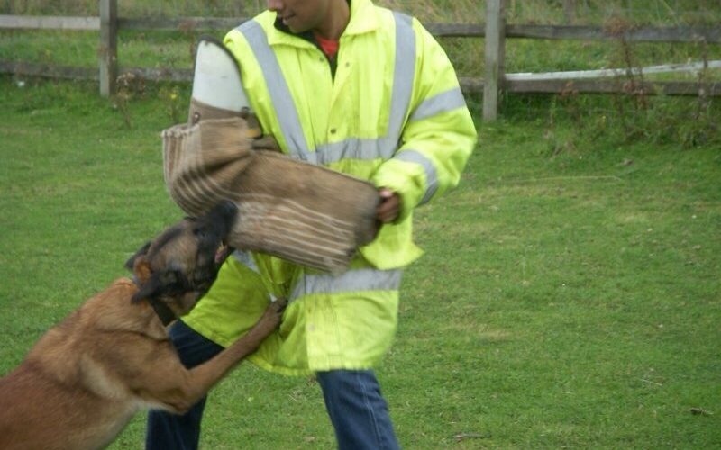 Which training course will best suit your dog?