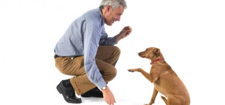 How to Raise a Healthy, Well-Behaved Dog