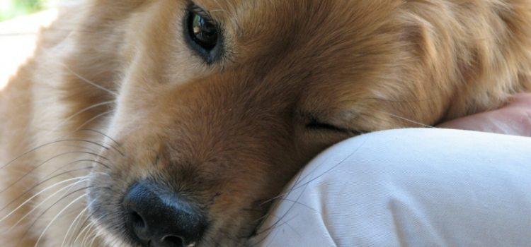 Keeping Your Dog's Mental Health in Tip-Top Shape